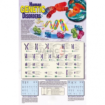 Genetics and Inheritance Equipments