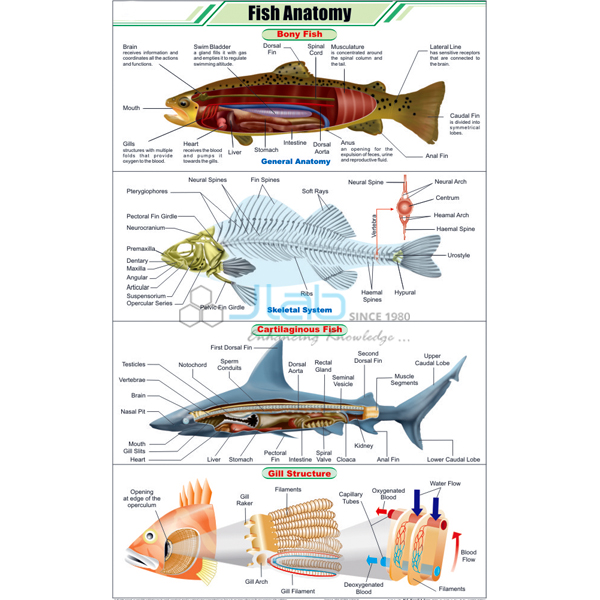 Fish Anatomy Chart JLab