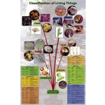 Classification of Living Things Poster