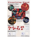 Visualizing Blood Poster